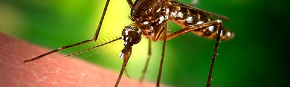 Suzbijanje komaraca iz vazduha i sa zemlje