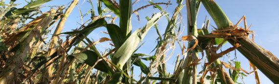 Tečaj za poljoprivrednike – Uzimanje uzoraka tla
