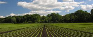 Suglasnost Ministarstva poljoprivrede na Odluku o davanju u zakup poljoprivrednog zemljišta
