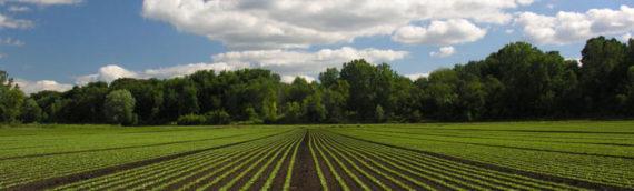 Odluka o izboru najpovoljnije ponude na Javnom natječaju za zakup poljoprivrednog zemljišta u vlasništvu Republike Hrvatske na području Općine Borovo