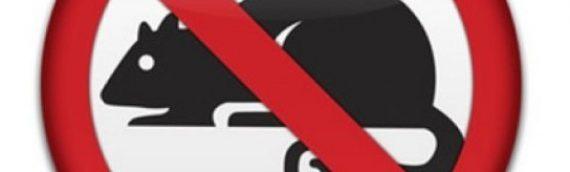 Od 4. do 12. maja deratizacija u Borovu